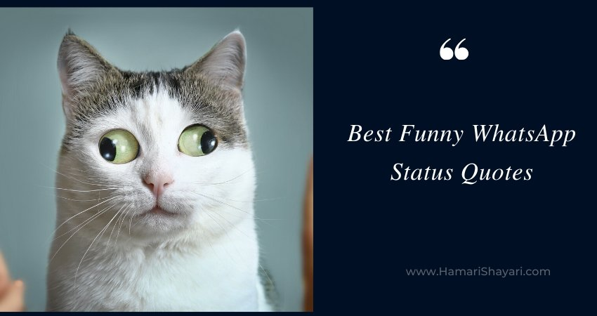 45+ Best Funny WhatsApp Status Quotes